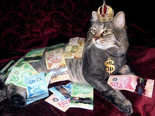부자 고양이