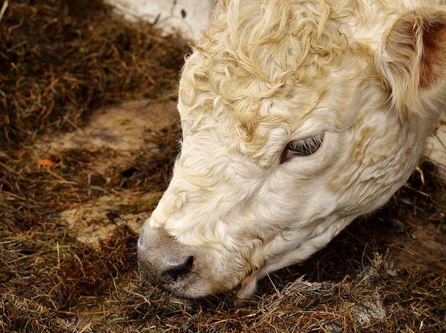 소결핵 확산 중, 소와 엘크 접근 주의해야
