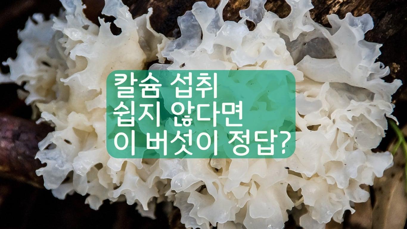 흰목이버섯