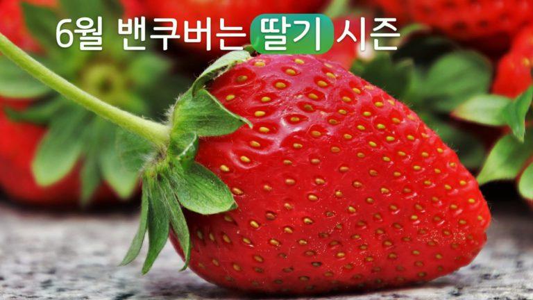 6월, 메트로밴쿠버는 딸기 유픽철
