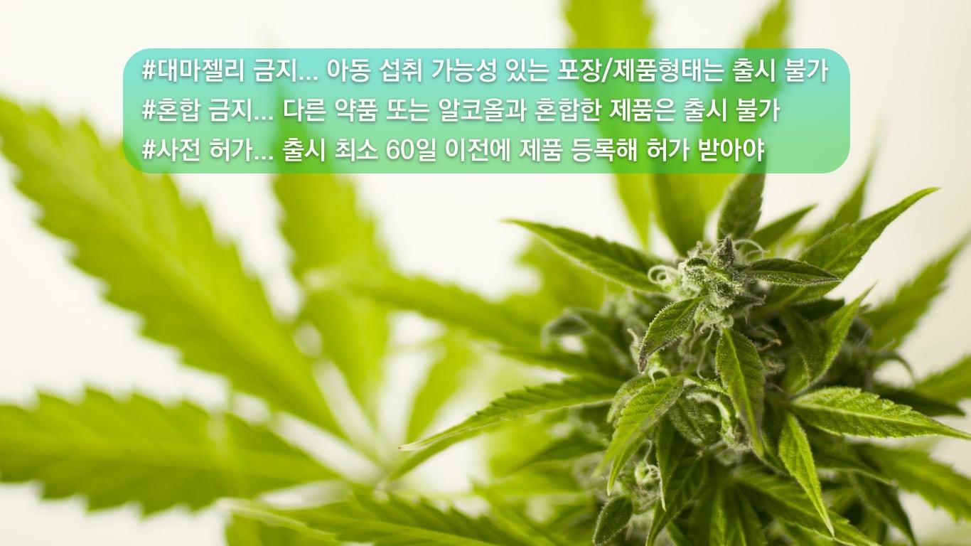 """캐나다 소아과 협회 """"아동 대마 중독 증가 우려"""" cannabis"""
