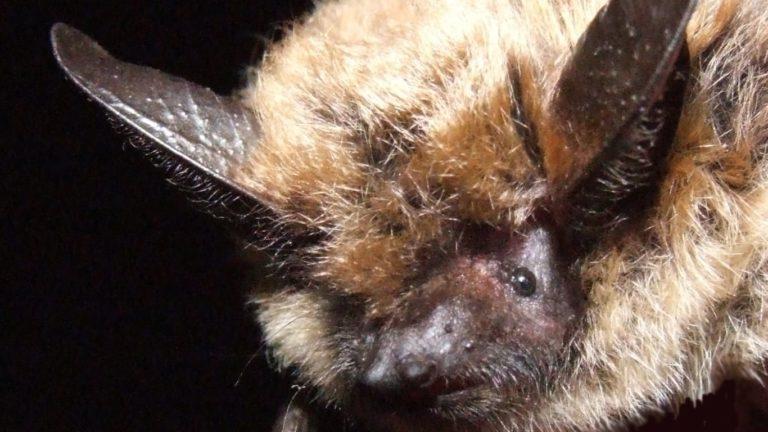 밴쿠버아일랜드에서 박쥐 접촉한 남성 광견병 사망
