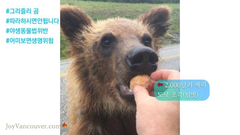 곰에게 도넛 줬다가 벌금 C$2,000