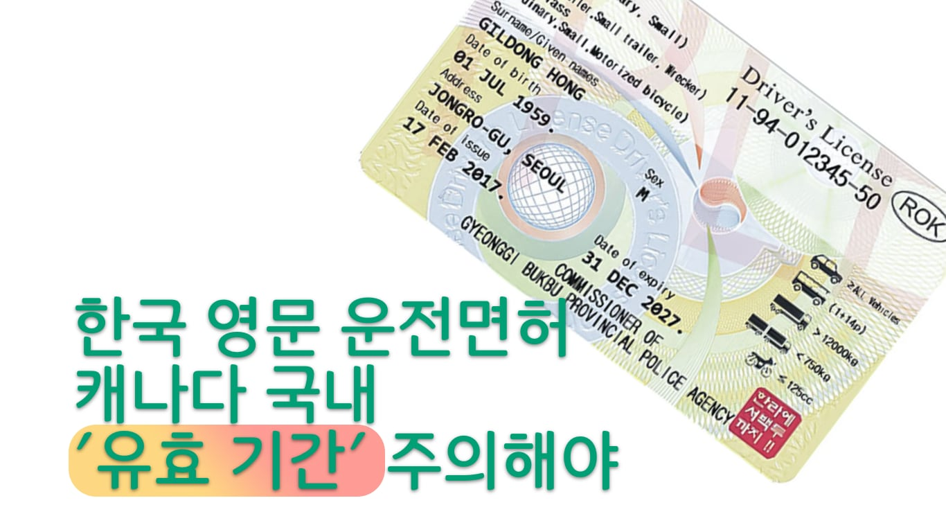 한국 한글 영문 병기 면허증 견본.