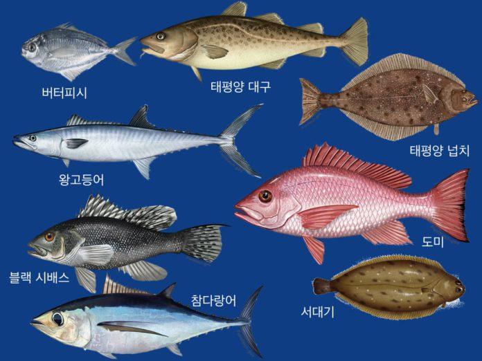 캐나다 시판 생선